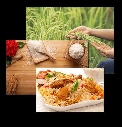 cascade rice1